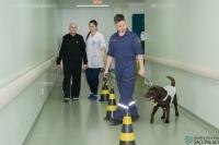 Cinoterapia: Cão auxilia na fisioterapia de pacientes do Hospital Regional São Paulo